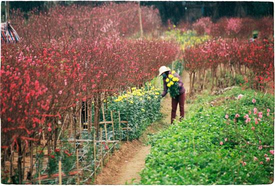 làng hoa hà nội