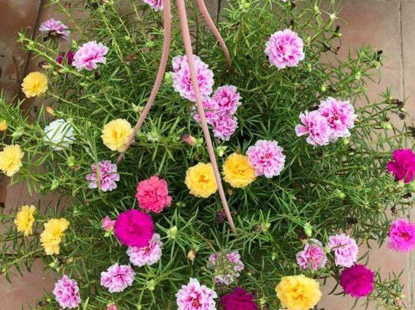 Shop bán hoa đẹp ở hà nội